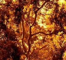 A Study of Light and Shadow in Sepia and Gold: Tree With Beautiful Foliage  by Ivana Redwine
