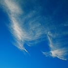 Amazon Sky by tomcelroy