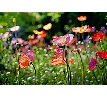 Flowers in Paris Photographic Print