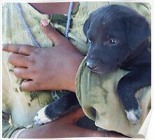 Puppy - Mahabalipuram, India Poster