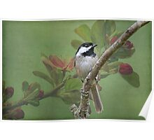 Chickadee amid the blossoms Poster