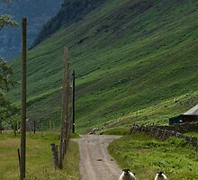 Walking Glen Esk by Panalot