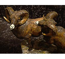 Dodge These Rams Photographic Print