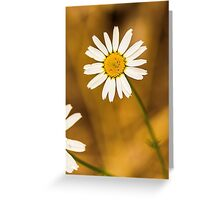 Daisy1 Greeting Card