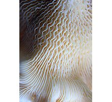 Curly White Photographic Print