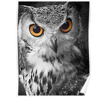 Studious Owl Mono 1 Poster