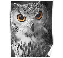 Studios Owl Mono 2 Poster