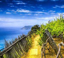Vineyard in the Italian Riviera by Tyler Roth