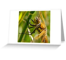 Four-spot Chaser Greeting Card