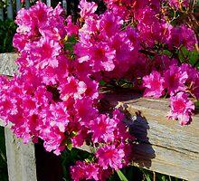Pink Cascade by Marta Boulden
