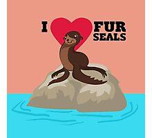 Love Fur Seals Photographic Print