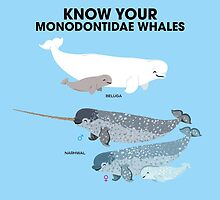 Know Your Monodontidae Whales by PepomintNarwhal