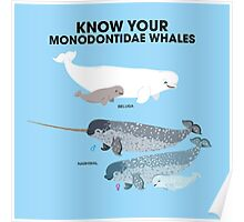 Know Your Monodontidae Whales Poster