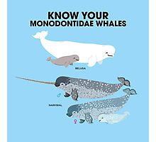 Know Your Monodontidae Whales Photographic Print