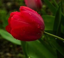 Nature's Tears by Diane Schuster