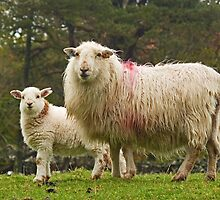 Welsh Beauties by Kat Simmons