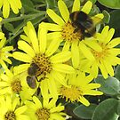 honey & bumble by armadillozenith