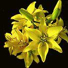 Sunshine Bouquet by Nancy Polanski