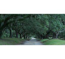 Plantation Road ver. 6 Photographic Print