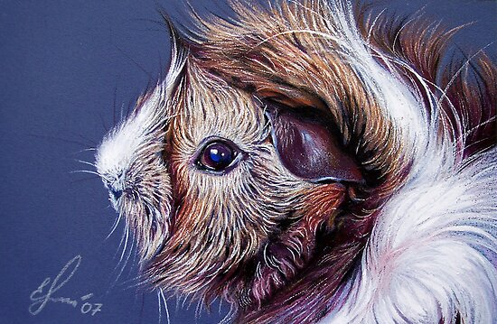 Bibble the guinea pig by Elena Kolotusha