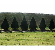 Pines & Vines Photographic Print