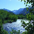 ~Cool Mountain Stream~ by NatureGreeting Cards ©ccwri