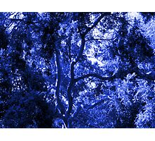 A Study of Light and Shadow in Blue: Tree With Beautiful Foliage  Photographic Print