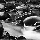 Williams River by Michael Howard