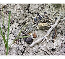 Young and Camouflaged (Grasshopper) Photographic Print