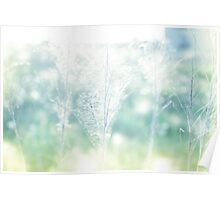 Dry field plants in a bright sun light with gossamer Poster