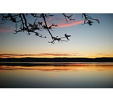 Lake Illawarra with Tree Photographic Print