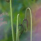 Always in my dreams by julie08