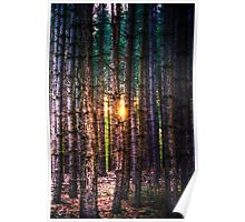 A Light in the Trees Poster