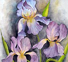 irises by shagufta