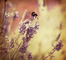 Flight of the Bumblebee by Paul Smith