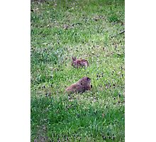 Backyard Meeting Photographic Print