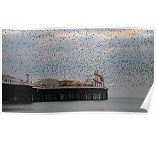 Seaside Starlings Poster