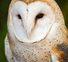 Barn Owl by Bryan Peterson