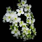 Small White flowers by Karen  Betts