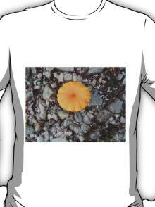 Single Yellow Fungi, Cradle Mountain, Tasmania, Australia. T-Shirt
