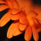Burning by Rosy Kueng Photography