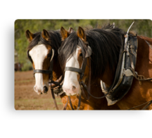 Clydesdale Brothers Canvas Print