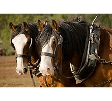Clydesdale Brothers Photographic Print