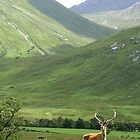 Monarch of the glen by Cat Perkinton