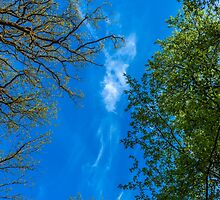 Trees And Sky 1 by colinstock
