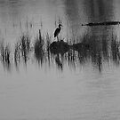silhouette&#x27;s of the swamp by kathy s gillentine