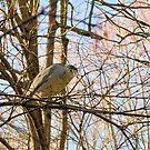 Resting Heron by ©Dawne M. Dunton