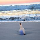 From The Sea Comes Love by ©Dawne M. Dunton