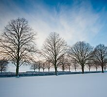 Trees and snow by Jaime Pharr