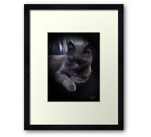 All Life Is Precious Framed Print